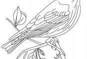 Blue Bird Cartoon - AZ Coloring Pages
