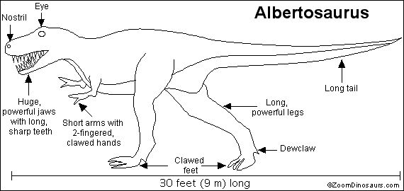 Fun name! Albertosaurus. Click for similar free coloring pages about dinosaurs! … Wallpaper