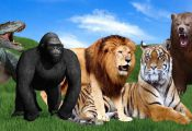 Learn Animals Names & Dinosaurs Sounds |  Animals Kids Songs | Wild Animals Baby...