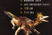 Walking With Dinosaurs; How to Draw Troodon