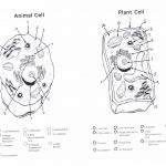 Animal and Plant Cell Coloring Sheet Animal and Plant Cell Coloring Sheet