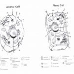 Animal Cell Color Animal Cell Color