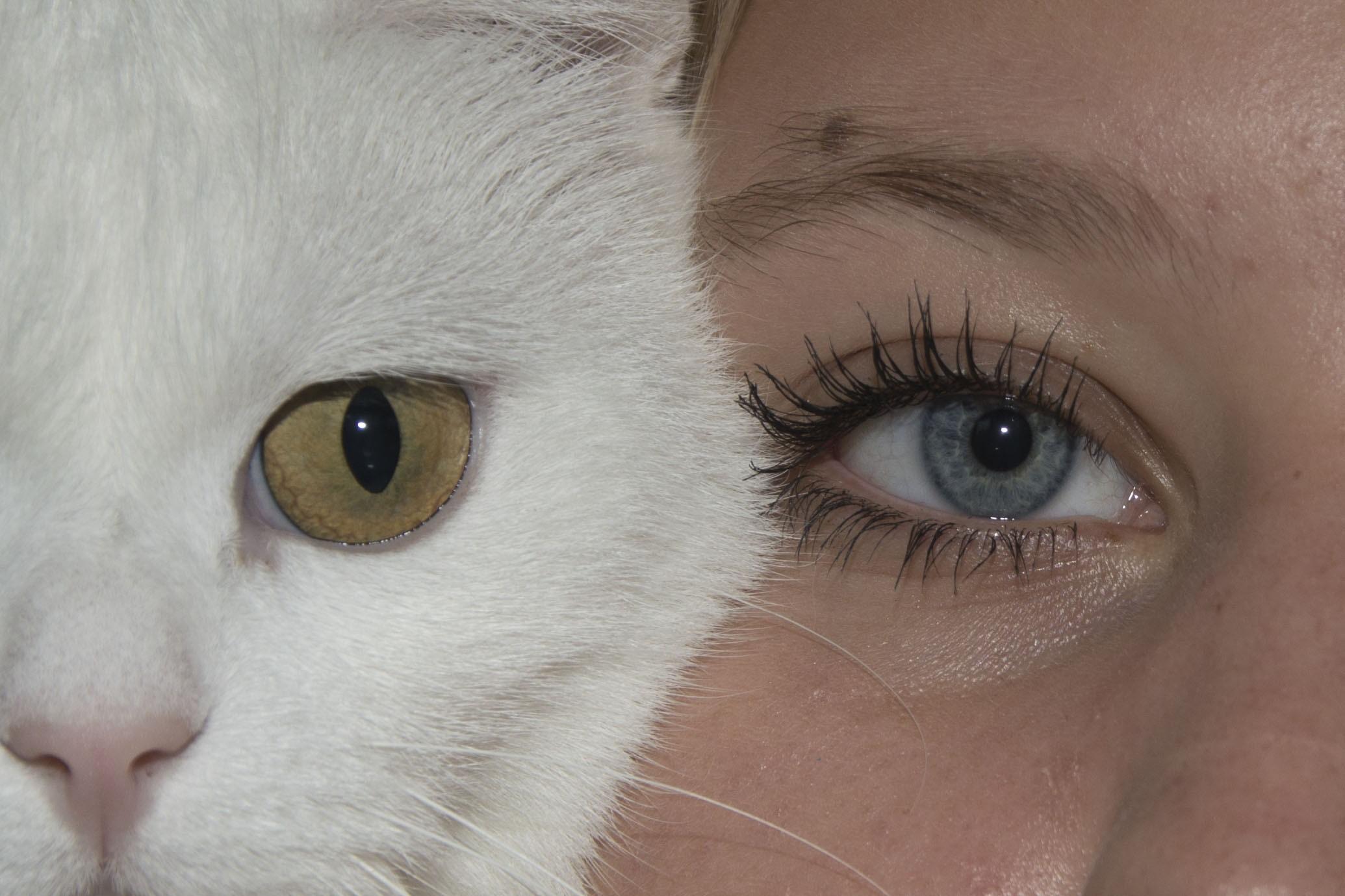 animal-eye-reflection-color-of-animal-eye-reflection-color Animal Eye Reflection Color Animal