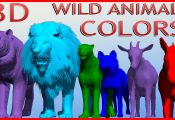 Animals Named after Colors Animals Named after Colors