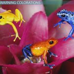 Aposematic Coloration Animals Aposematic Coloration Animals