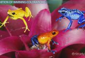 Aposematic Coloration Animals Aposematic Coloration Animals
