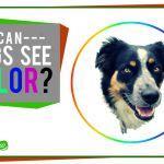 Are Animals Color Blind are Animals Color Blind
