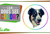 Are Animals Color Blind are Animals Color Blind