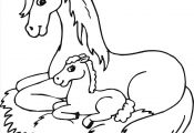 Baby Horse Coloring Pages Baby Horse Coloring Pages