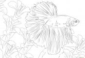 Betta Fish Coloring Pages Betta Fish Coloring Pages