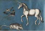 Big Pictures Of Unicorns Big Pictures Of Unicorns
