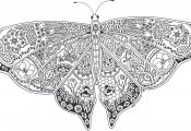 Butterfly Coloring Pages for Adults butterfly Coloring Pages for Adults