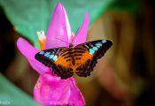 Butterfly Colors Meaning butterfly Colors Meaning