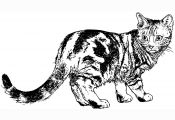 Calico Cat Coloring Pages Calico Cat Coloring Pages