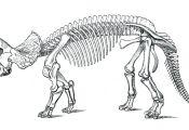 Dino Skeleton Coloring Dino Skeleton Coloring
