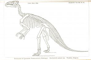 Dinosaurs Skeleton Coloring Pages Dinosaurs Skeleton Coloring Pages