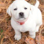 Do Puppies Change Color Do Puppies Change Color