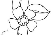 flowers coloring pages | flower coloring pages download hq cartoon flower colori...