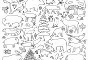 Forest Animals Coloring Pages forest Animals Coloring Pages