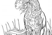 Free Printable Horse Coloring Pages Free Printable Horse Coloring Pages