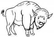 Grassland Animals Coloring Pages Grassland Animals Coloring Pages