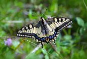 How butterflies Get their Color How butterflies Get their Color
