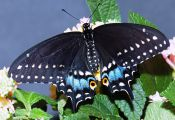 How Many Colors Can butterflies See How Many Colors Can butterflies See