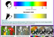 List Of Color Blind Animals List Of Color Blind Animals