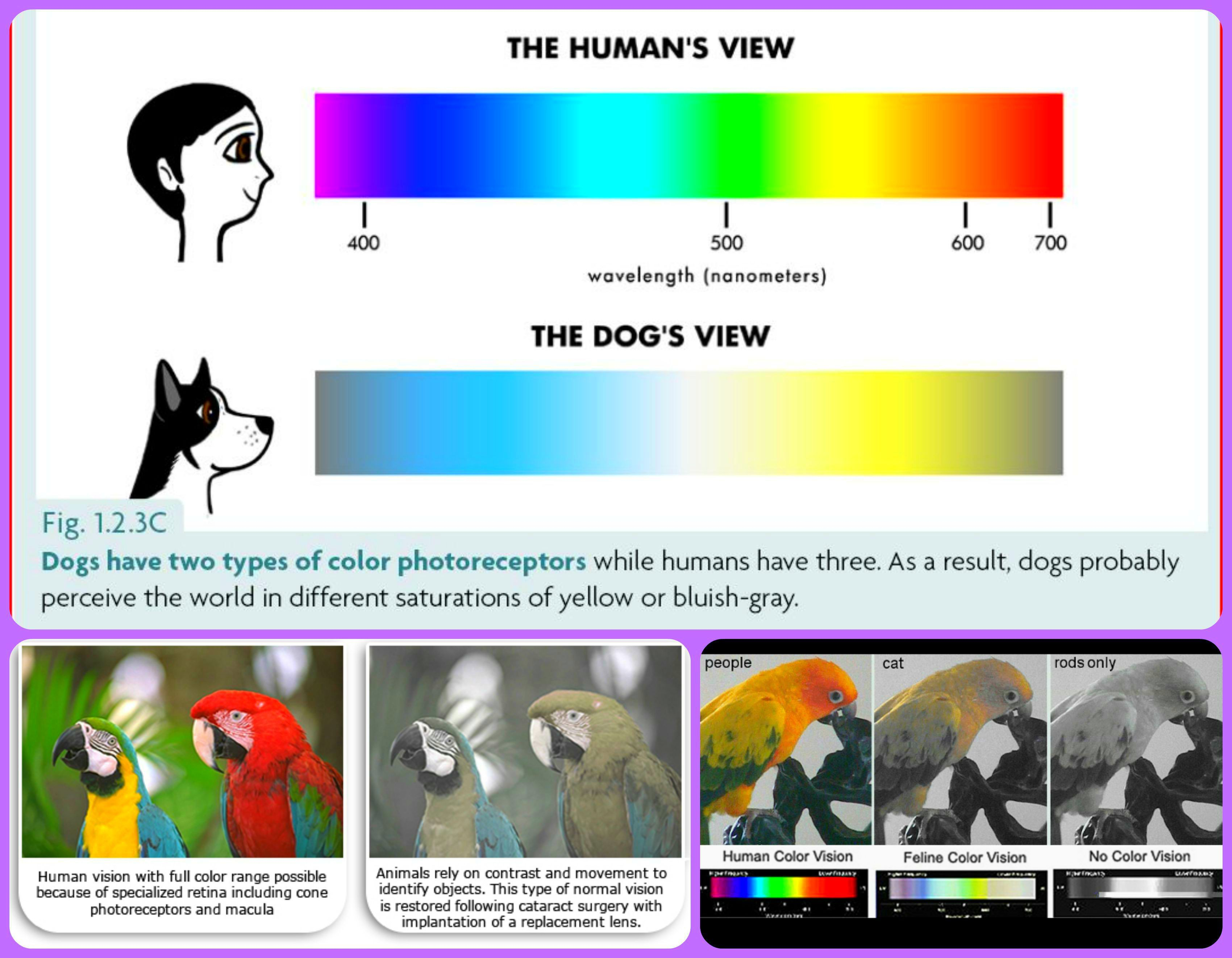 list-of-color-blind-animals-of-list-of-color-blind-animals List Of Color Blind Animals Animal