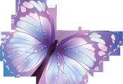 Meaning Of butterfly Colors Meaning Of butterfly Colors