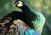 Most Colorful Animals Most Colorful Animals
