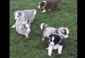 Multi Colored Puppies Multi Colored Puppies