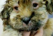 Puppy Changing Color Puppy Changing Color