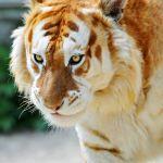 Rare Animal Colors Rare Animal Colors