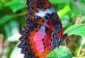 Real Colorful butterflies Real Colorful butterflies