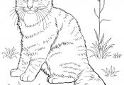 Realistic Cat Coloring Pages Realistic Cat Coloring Pages