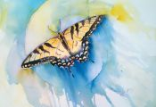 Spiritual Meaning Of butterfly Colors Spiritual Meaning Of butterfly Colors