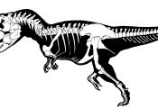 T Rex Fossil Coloring Page T Rex Fossil Coloring Page