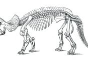T Rex Skeleton Coloring Page T Rex Skeleton Coloring Page