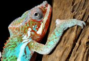 What Animal Can Change Color What Animal Can Change Color