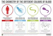 What Animals Have Different Colored Blood What Animals Have Different Colored Blood