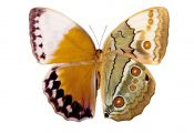 What Color are butterflies What Color are butterflies