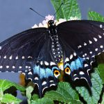 What Color Should A butterfly House Be What Color Should A butterfly House Be