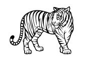 Wild Animals Coloring Pages Wild Animals Coloring Pages