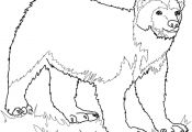 Wolverine Animal Coloring Pages Wolverine Animal Coloring Pages