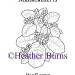 State Flower Coloring Book: Massachusetts Mayflower Coloring Page